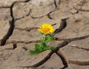 Acceptance Leads To Growth